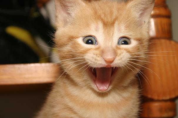 Самые улыбчивые котики интернета