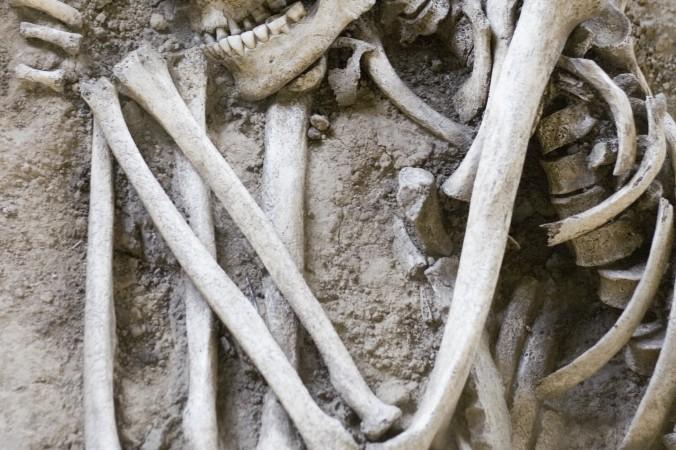Гиганты Амазонки: немецкие специалисты изучают поразительные скелеты, обнаруженные в Эквадоре и Перу