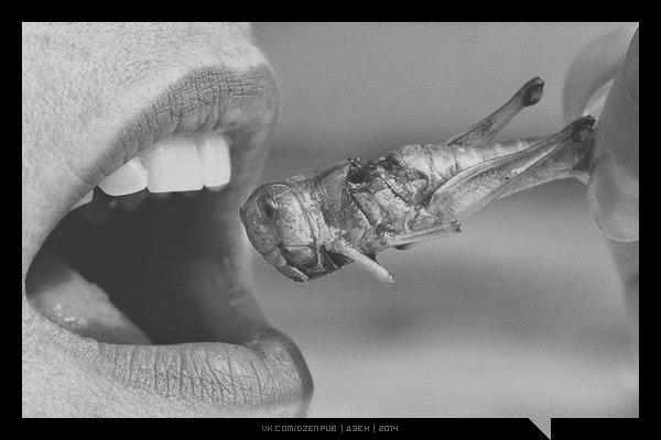 Пищевая ценность наиболее популярных насекомых (на 100 г):