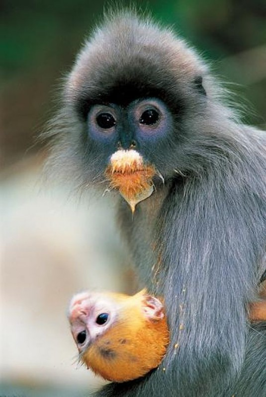 primate1 535x800 Тайский заповедник дикой природы Phu Khieo