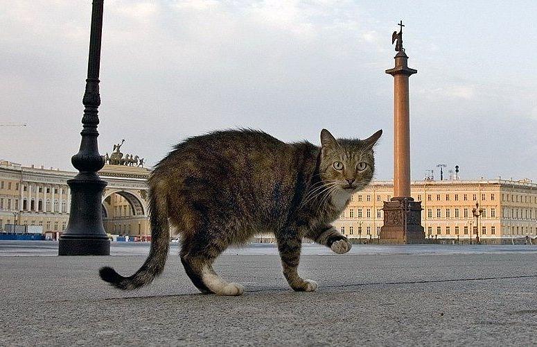 Эрмитажные коты)