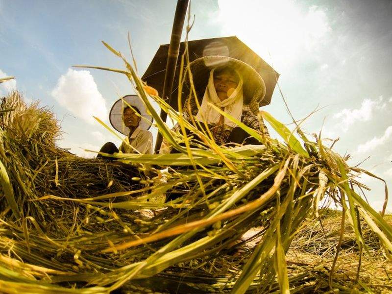 Там, где растет рис