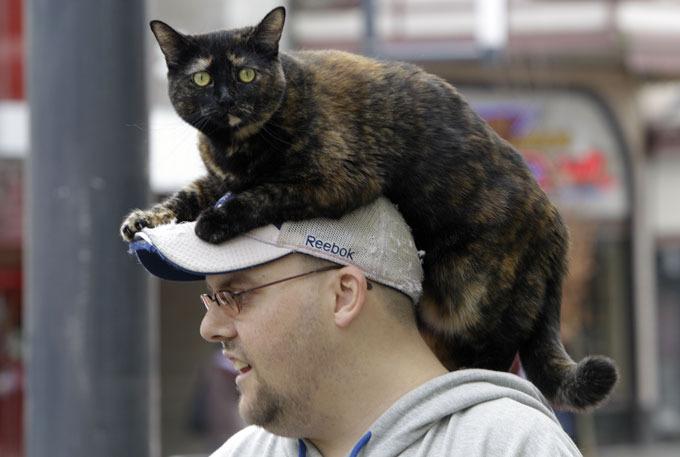 Правда ли, что кошка ложится на больное место человека?