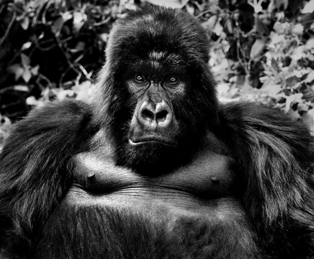 """Подборка """"дико"""" эмоциональных фотографий животных животные, фото, эмоции"""
