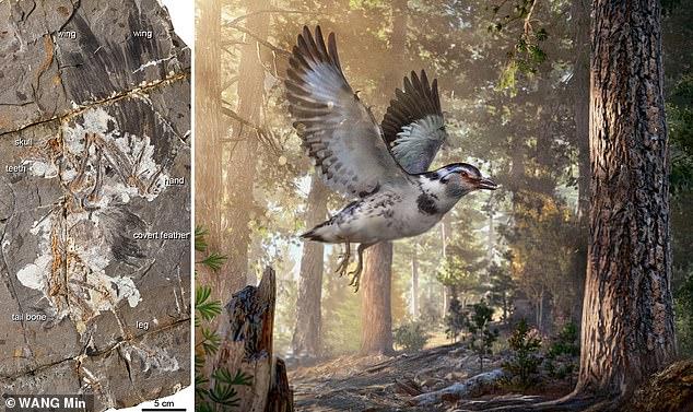 Новый вид птицы из мелового …