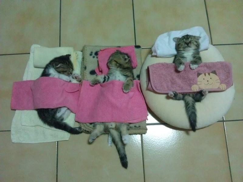 sleepingcats11 Коты, познавшие науку сна
