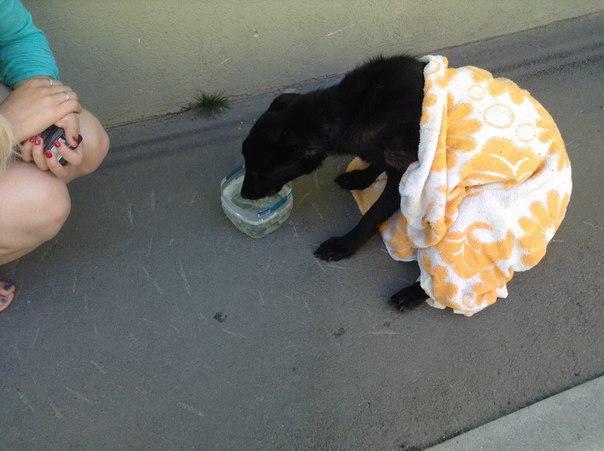 В Кошелеве мужчина оставил двух собак в квартире без еды и воды, одно животное погибло.