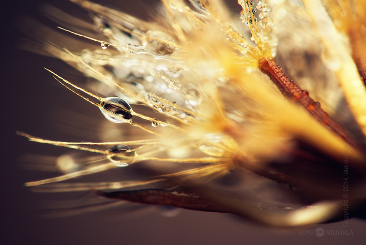 macro photos Joni Niemela on iStar Design Blog on <a href=