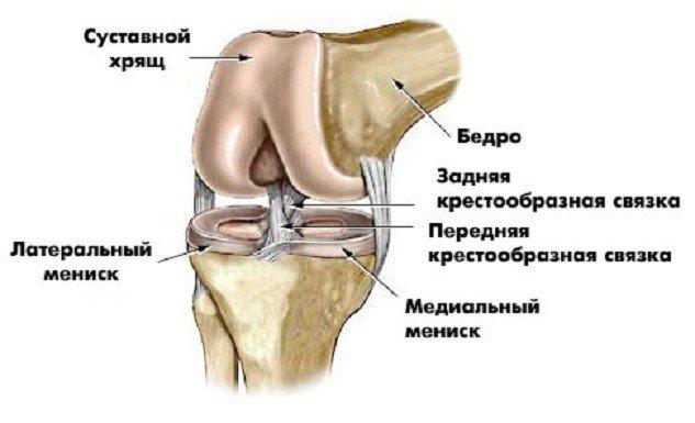 боль в костях коленного сустава