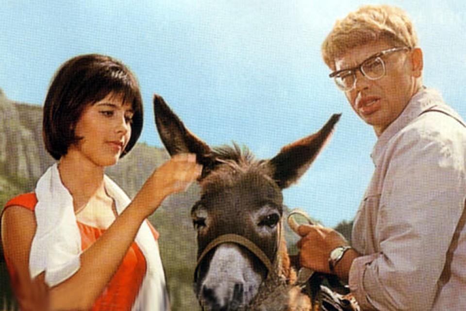 Реальные истории животных-киноактеров: Осел Шурика служил в спецназе, а Бима не любил хозяин