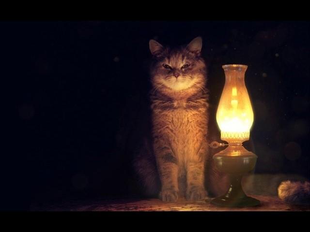 Анастасия Скогорева (ёжики):  Несколько наблюдений воскресным вечером...