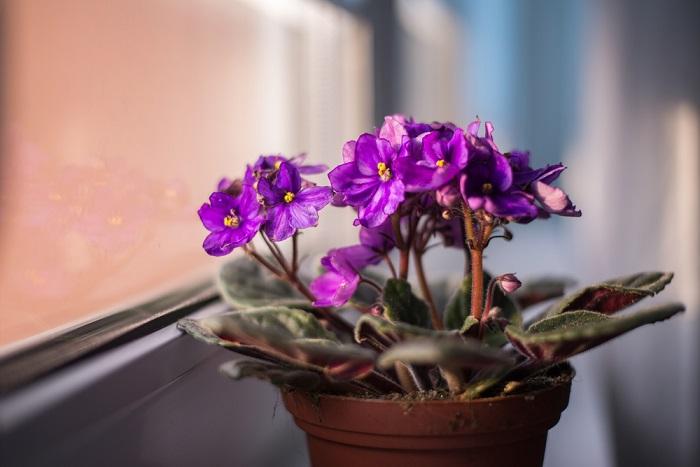 Чем покрыть землю в цветочных горшках