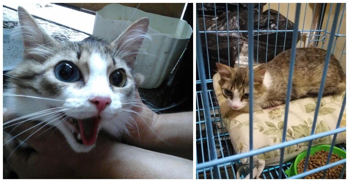 «У неё глаза разные, а сама — ласкуша…» В Оренбурге нашли кошку… запечатанную в пакет