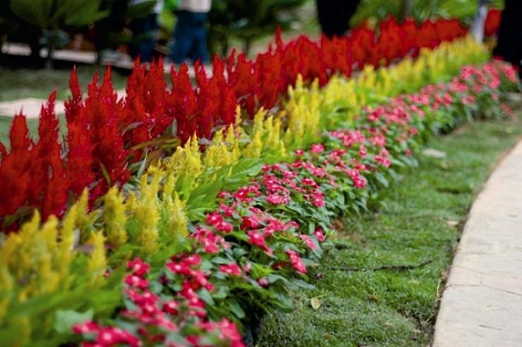 """Уютный сад """" 2009 """" Апрель"""