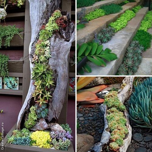 В саду можно создавать из суккулентов ручейки, водопады и другие интересные объекты