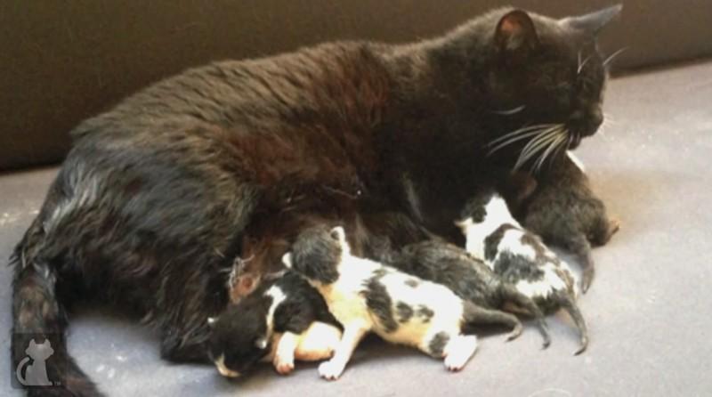 У этой кошки умерли все котята. Но у судьбы были на нее свои планы