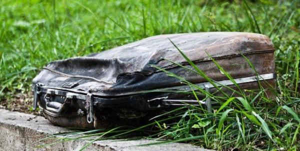 Девушка нашла старый чемодан в парке животные, спасение