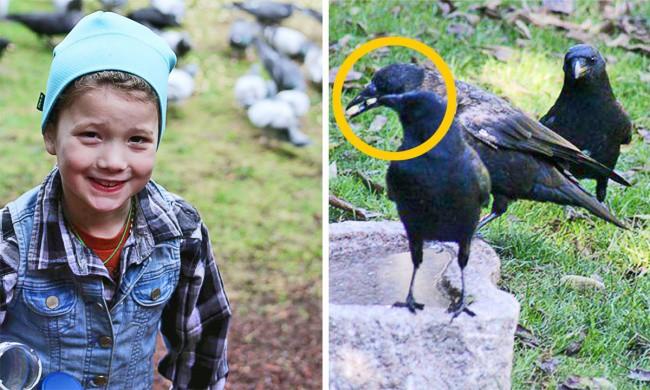 Девочка подкармливала ворон, и вот как они ей ответили(7 фото)