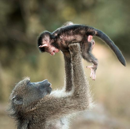 Фотографии животных животные, лирика, природа, факты, фотографии