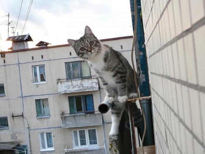 Жена застукала мужа с любовницей, но тут появилась кошка…