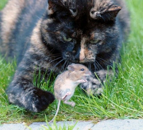 Кошки-мышки (14 фото)