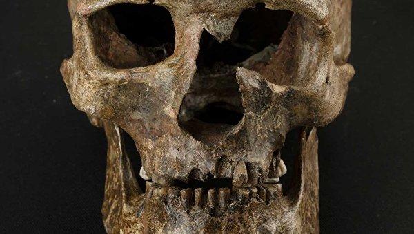 Генетики против археологов: в конце ледникового периода почти вся Европа вымерла? Любопытно ... Вот только кроманьонцы Русской Равнины - как-то это не заметили ...