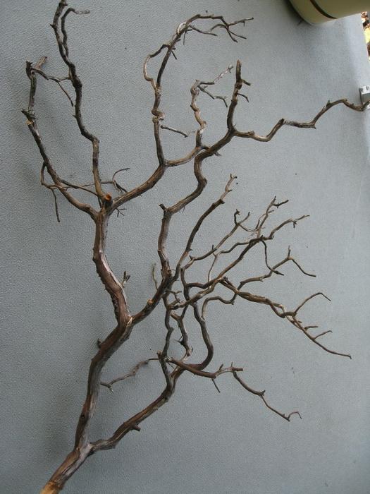 Ветви дерева для декора