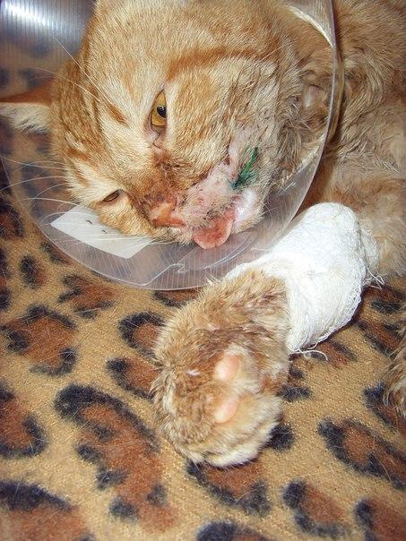 Три года назад я подобрала кота после какой-то жуткой травмы...