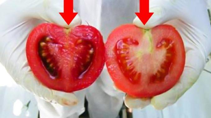 Не дай себя обмануть. Мы едим яд ежедневно… Внимание, вот как выглядят помидоры с ГМО.