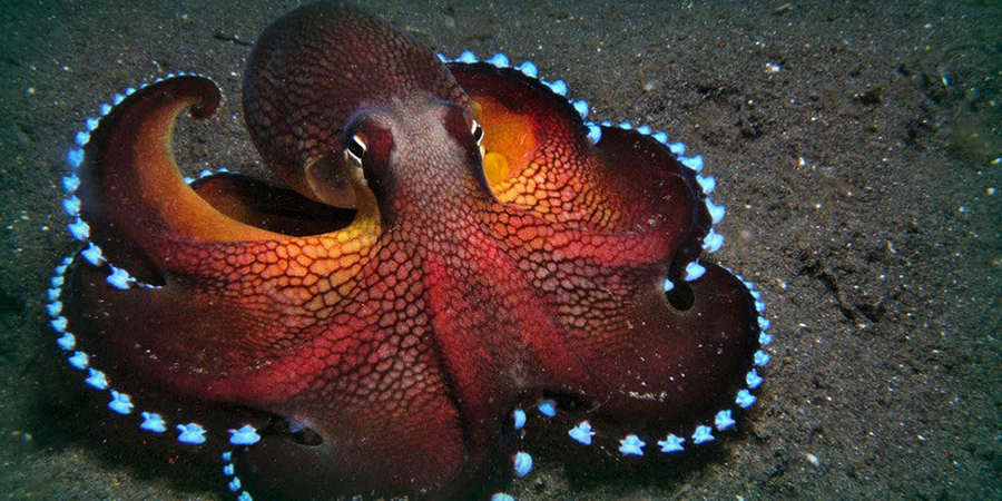 Могут ли осьминоги быть пришельцами