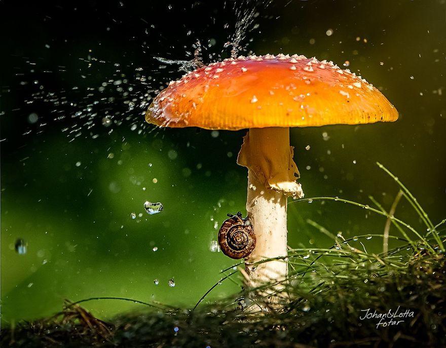Хороший грибок — хороший зонтик животные, зонтик