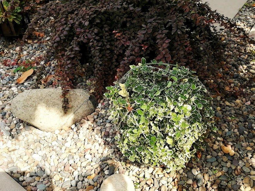 Как сформировать шариком растение, которое стелется по земле