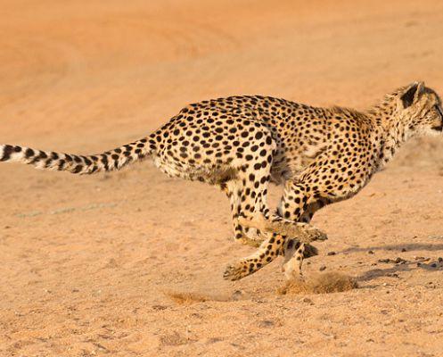 10 суперспособностей животных