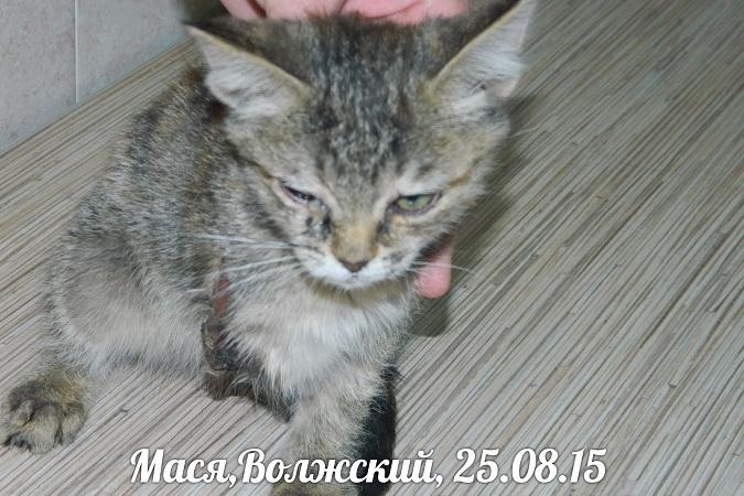 Оторвали Масе лапу: В Волжском живодеры издевались над двухмесячным котенком
