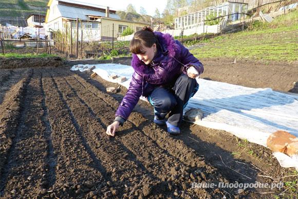 Как сделать плодородную почву из глинистой 57
