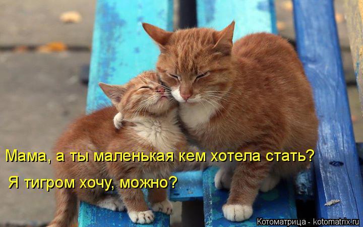Котоматрица: Мама, а ты маленькая кем хотела стать? Я тигром хочу, можно?