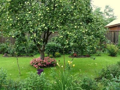 Вредители садовых деревьев и…