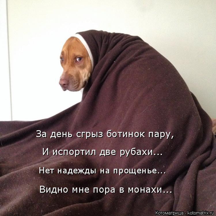 Котоматрица: Чтож Нет надежды на прощенье... Видно мне пора в монахи... За день сгрыз ботинок пару,  И испортил две рубахи...