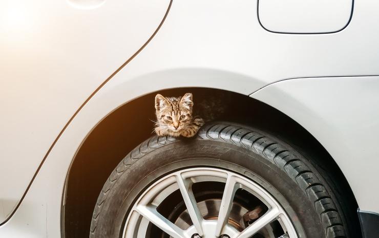 Осторожно, коты на колесах или что проверять перед тем, как завести авто