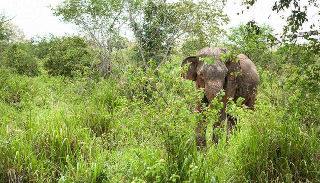 На Шри-Ланке слоненка спасли из глубокого колодца