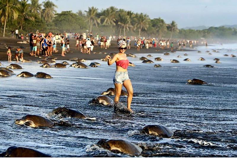 В Коста-Рике люди помешали черепахам отложить яйца