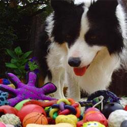 Как собаки понимают значения слов?