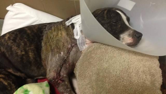 Подросток, бросивший на железнодорожных путях собаку, приговорен к тюремному заключениюнию животные, справедливость