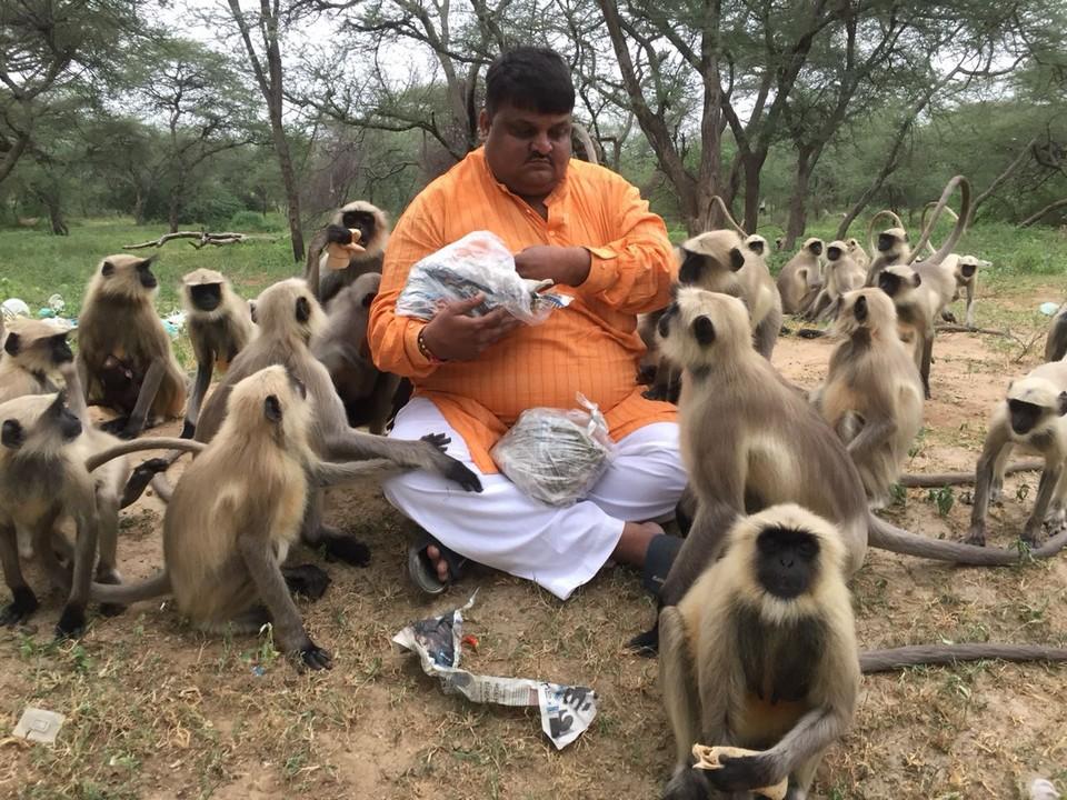 Индиец кормит более 700 обезьян