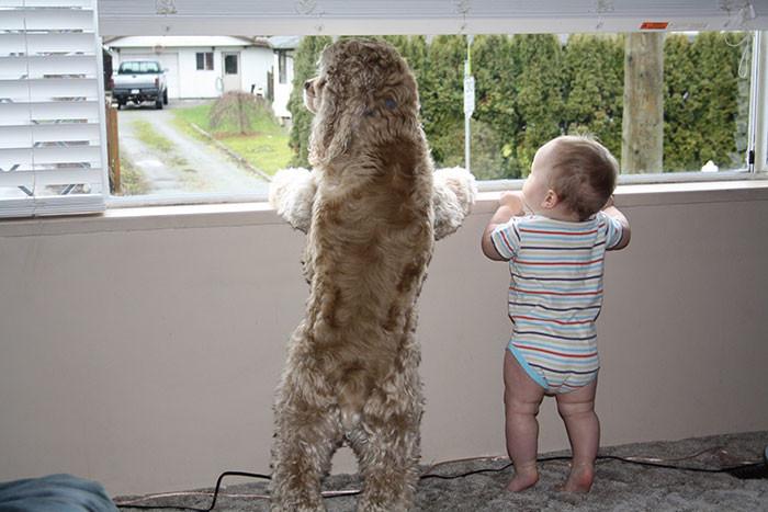 Что там интересного  дружба, ребенок, собака
