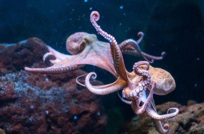 Загадочный Октлантис: город осьминогов