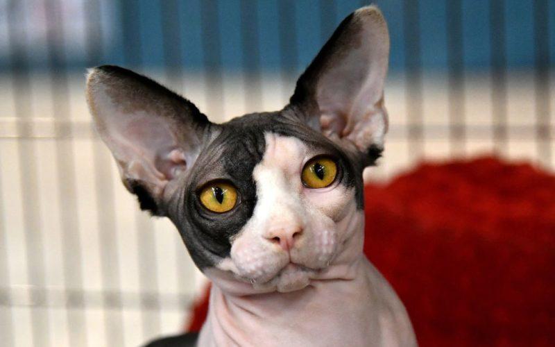 Международная выставка кошек…