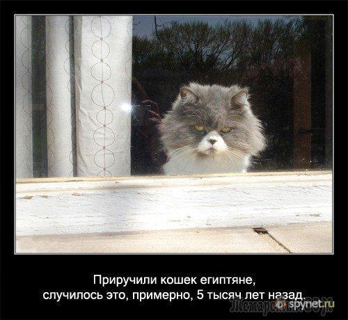 Некоторые факты о кошках