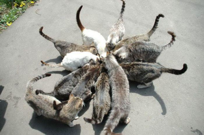 Высказывания Великих людей о кошках