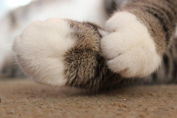 Первая социальная сеть про кошек Опубликуй фото своего любимца, веди блог о его жизни!  #фото #кошки ...